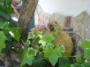 vine covered garden