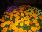 Marigolds are beginning to be seen everywhere. (This is a pick-up load.)