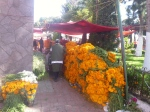 In Otumba for a few hours, shopping for flowers for Dia de los Muertos offrendas.